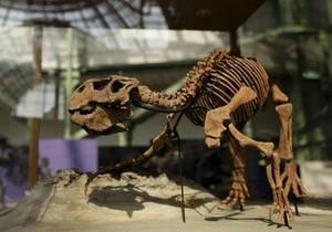 Фото: Reuters Ученые: Динозавры страдали от вшей